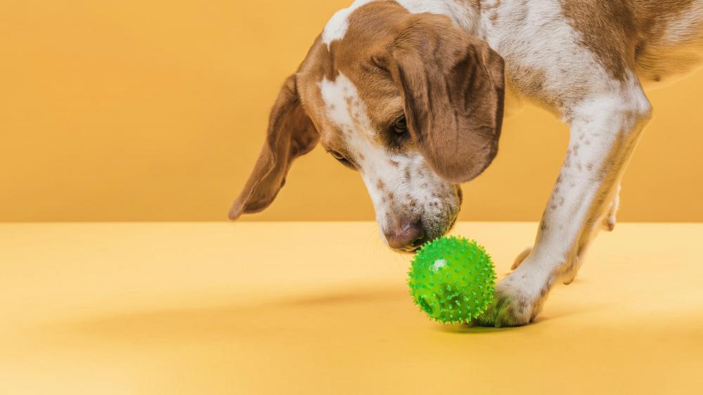 Cuidados redobrados com a higiene do pet e dos brinquedos estão entre as recomendações - Foto: Da assessoria
