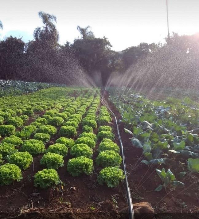 """""""Nós sabíamos que existia a vontade dos consumidores adquirirem produtos da região, que os produtores precisavam de um mercado mais estável e que os compradores queriam produtos de qualidade"""", afirmou o extensionista José Eustáquio Pereira"""