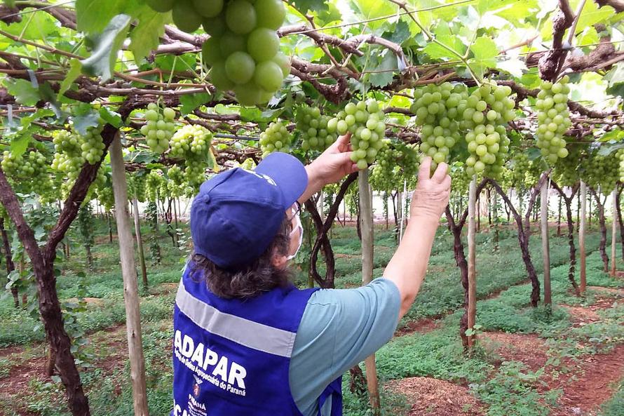 """""""Esse trabalho mitiga o risco de disseminação de pragas e possibilita o acesso dos produtos vegetais paranaenses aos mais diversos mercados"""", diz Manoel Luiz de Azevedo, o diretor de Defesa Agropecuária."""