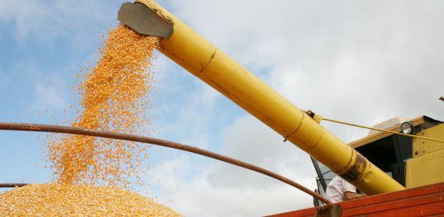 Milho é aposta para o setor de etanol