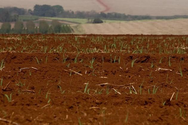 PR: Estiagem já compromete produção de soja e milho de 2015