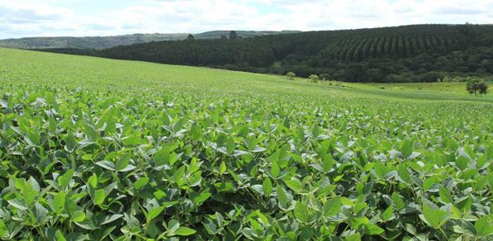 Clima propicia 75% das lavouras de soja em boas condições