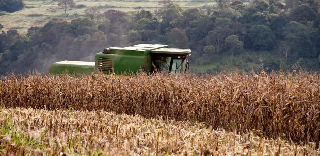 Governo destina R$ 90 milhões para seguro do trigo, mas esquece do milho safrinha